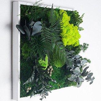 Mur végétal panoramique