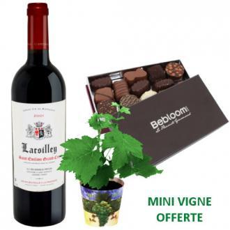 Pack vigne, vin et chocolats, livrés !