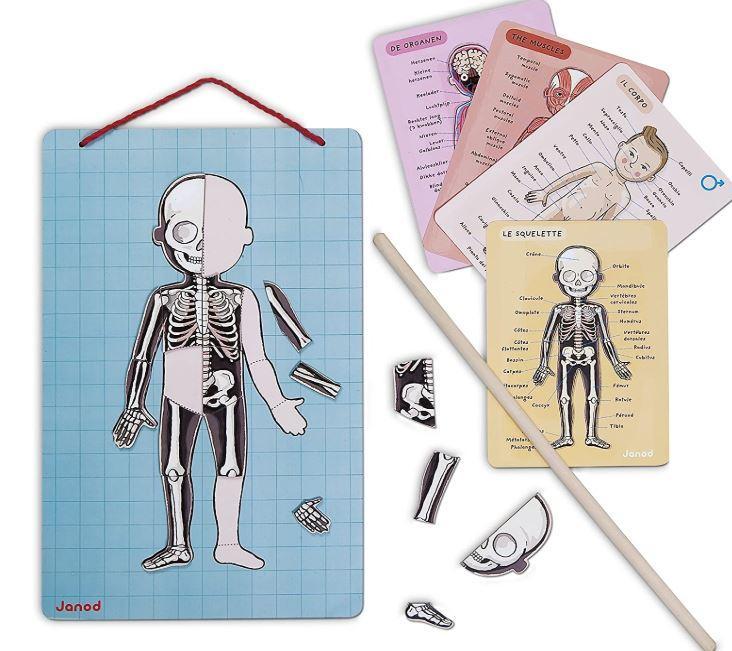 Apprendre le corps humain, planche et bâtonnet